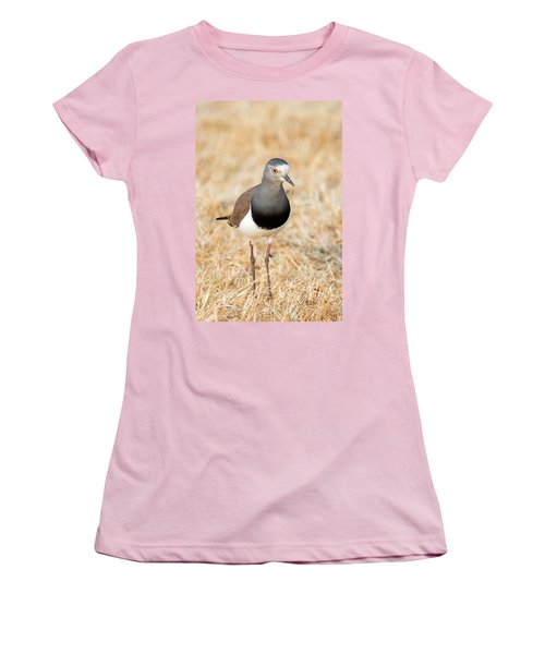 African Wattled Lapwing Vanellus Women's T-Shirt (Junior Cut) by Panoramic Images