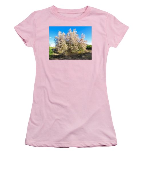Desert Ironwood Tree In Bloom - Early Morning Women's T-Shirt (Athletic Fit)