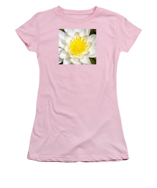 Elegant Lotus Women's T-Shirt (Junior Cut) by Christopher L Thomley
