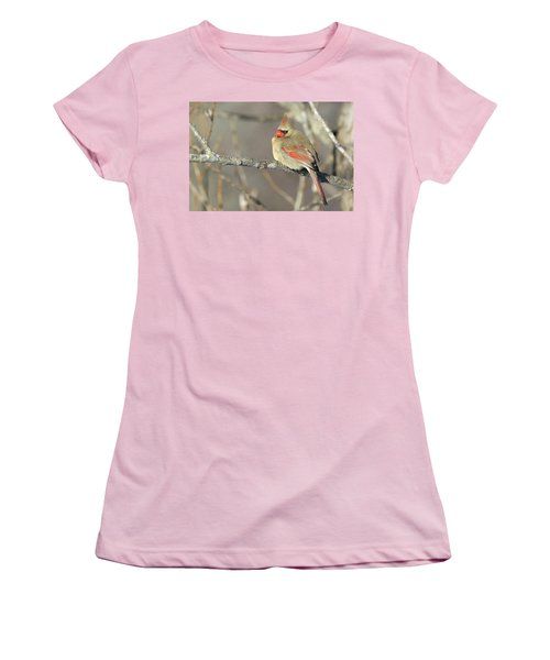 Pretty Female Cardinal Women's T-Shirt (Junior Cut) by Brook Burling