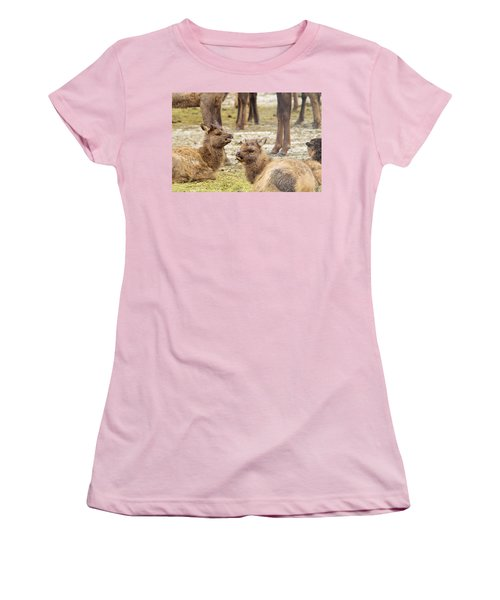 Women's T-Shirt (Junior Cut) featuring the photograph Yearlings by Jeff Swan