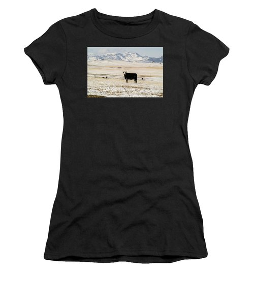 Black Baldy Cows Women's T-Shirt
