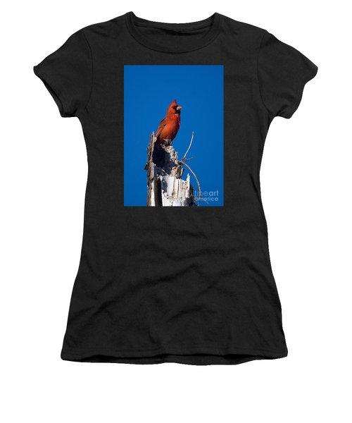 Cardinal On Honeymoon Island Women's T-Shirt (Athletic Fit)
