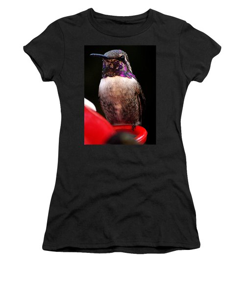 Women's T-Shirt (Junior Cut) featuring the photograph Colorful White Eared Male Hummingbird Anna Posing On Perch by Jay Milo