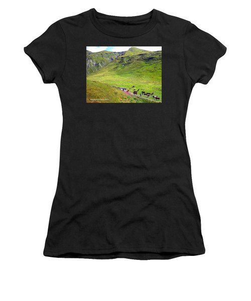Cows In A Valley Women's T-Shirt