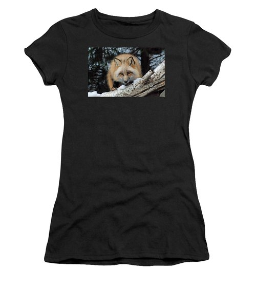 Curious Fox Women's T-Shirt (Athletic Fit)