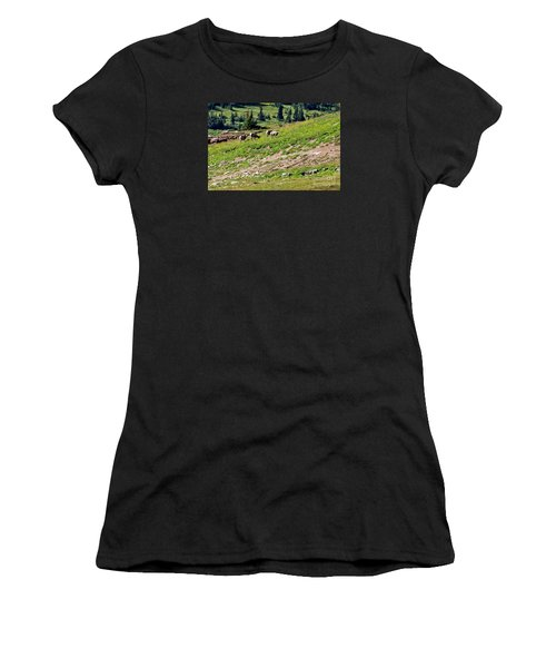 Grazing Big Horn Sheep Women's T-Shirt