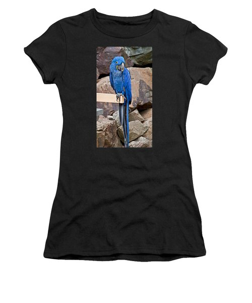 Hyacinth Macaw Parrot Bird Art Prints Women's T-Shirt (Athletic Fit)
