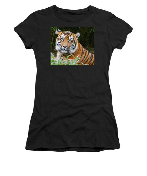 The Eyes Of A Sumatran Tiger Women's T-Shirt (Junior Cut) by Emmy Marie Vickers
