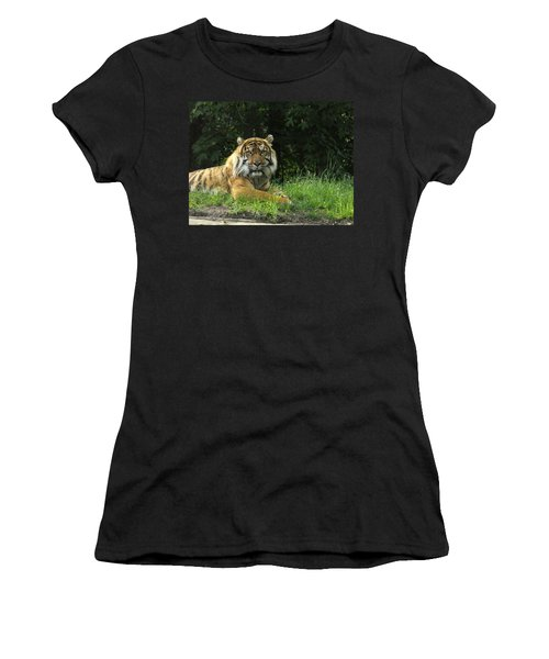 Women's T-Shirt (Junior Cut) featuring the photograph Tiger At Rest by Lingfai Leung