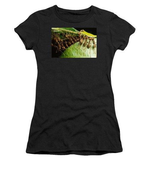 Weaver Ant Group Binding Leaves Women's T-Shirt (Junior Cut) by Mark Moffett