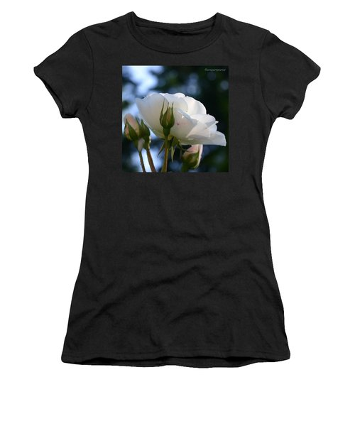 White Rose And Rosebuds In Anna's Gardens Women's T-Shirt (Athletic Fit)