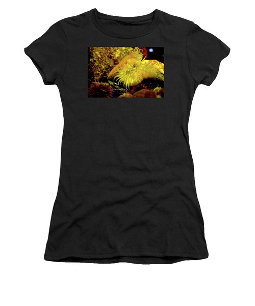 Sea Urchins Women's T-Shirt (Athletic Fit)