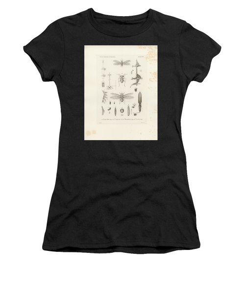 African Termites And Their Anatomy Women's T-Shirt