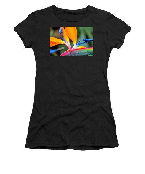 Bird Of Paradise After The Rain Women's T-Shirt