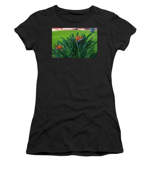 Birds Of Paradise, Vistoria Falls Hotel Women's T-Shirt