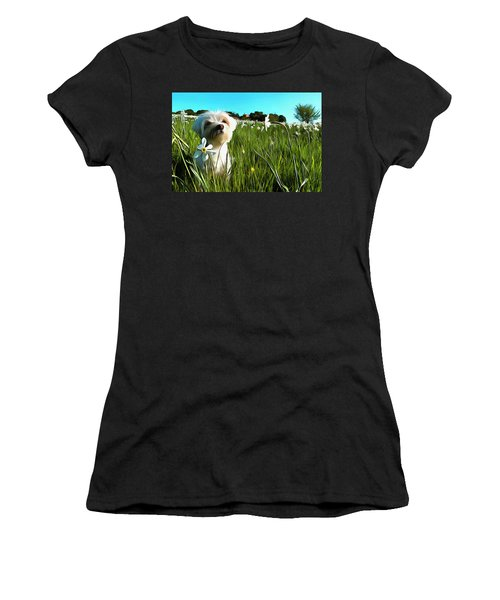 Blooming Daffodils In The Antola Park With Maltese I Paint Women's T-Shirt