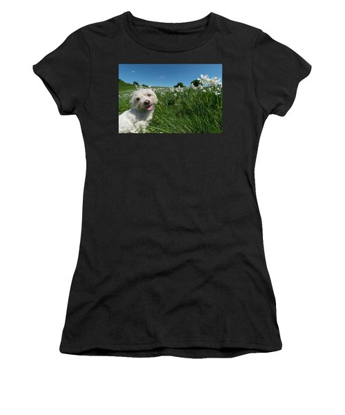 Blooming Daffodils In The Antola Park With Maltese II Women's T-Shirt