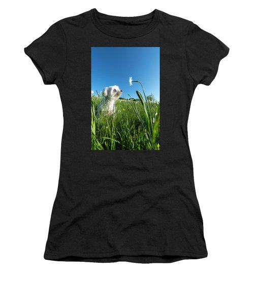 Blooming Daffodils In The Antola Park With Maltese IIi Women's T-Shirt