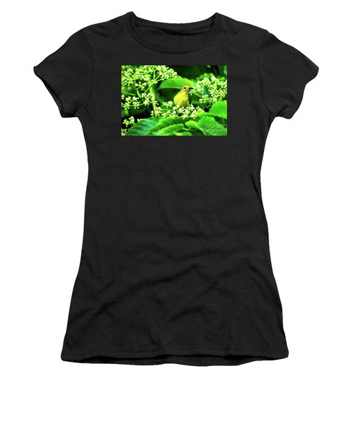 Brown Neck Sunbird Women's T-Shirt