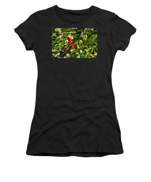 Cardinal In Tree Women's T-Shirt