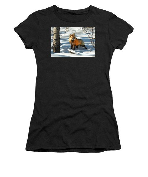 Curious Fox Women's T-Shirt
