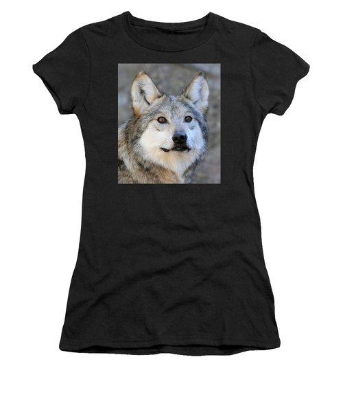 Curious Wolf Women's T-Shirt