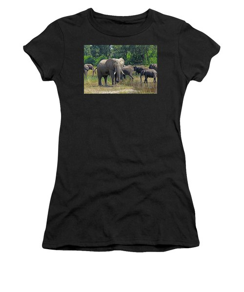 Elephants 3 Women's T-Shirt