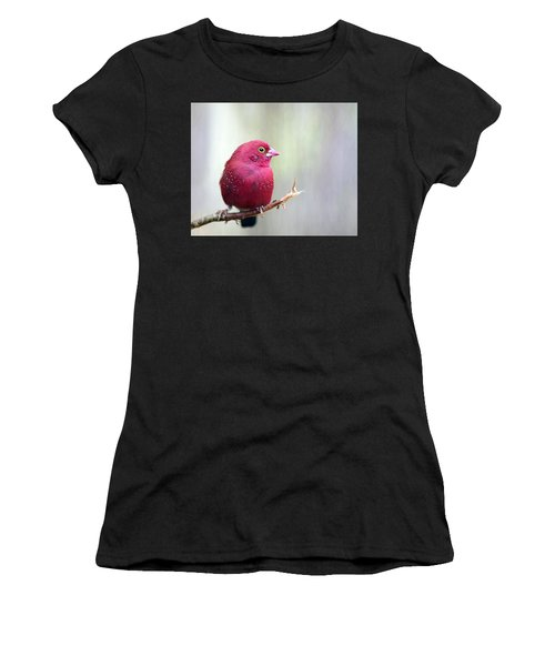 Fire Finch Women's T-Shirt (Athletic Fit)