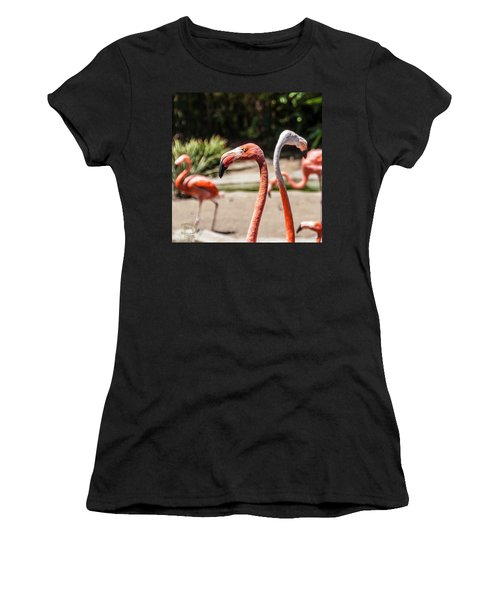 Flamingo Pair Women's T-Shirt (Junior Cut) by Daniel Hebard