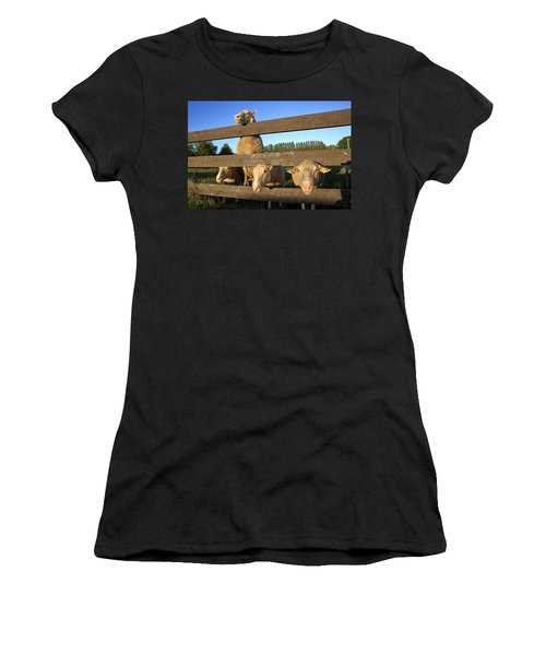 Four Sheep At A Fence Women's T-Shirt