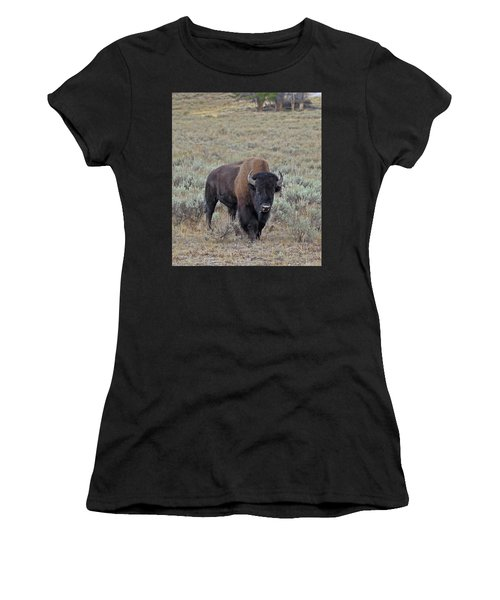 Handsome Bison Bull Women's T-Shirt