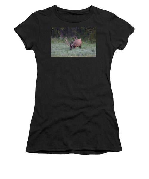 Bull Elk Rocky Mountain Np Co Women's T-Shirt