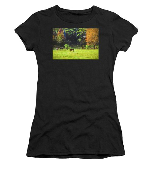 Morgan Horses In Autumn Pasture Women's T-Shirt