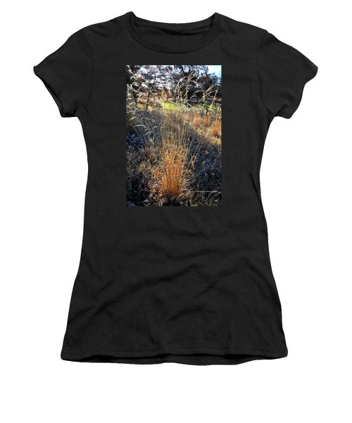 Morning Sun Backlights Fall Grasses In Glacial Park Women's T-Shirt (Athletic Fit)