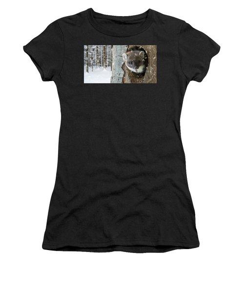 Pine Marten In Tree In Winter Women's T-Shirt