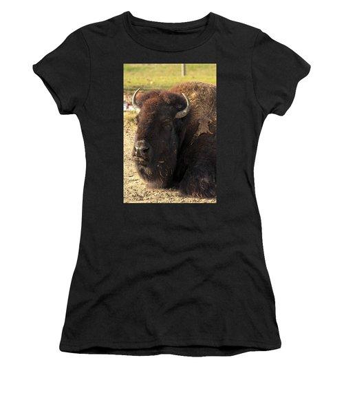 Resting Buffalo Women's T-Shirt