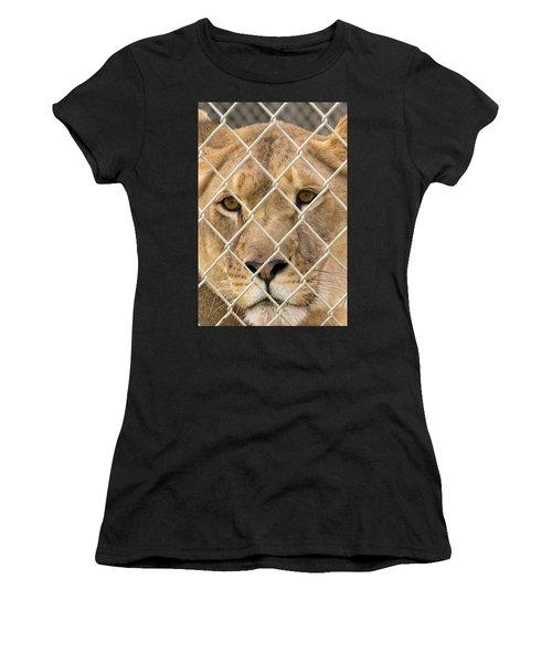 Staring Lioness Women's T-Shirt