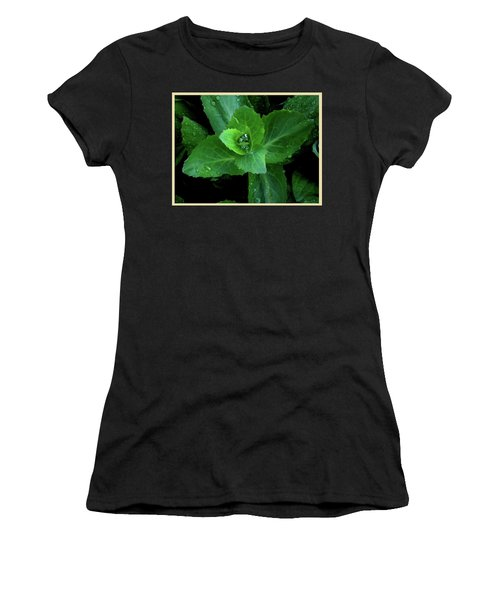 Succulent After The Rain  Women's T-Shirt
