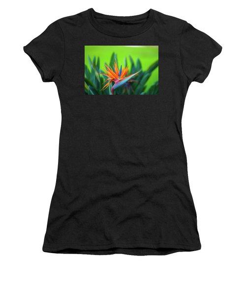 Victoria Falls Bird Of Paradise Women's T-Shirt