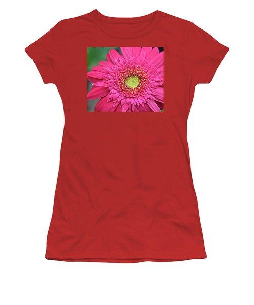 Gerbera Daisy Women's T-Shirt (Junior Cut) by Ronda Ryan