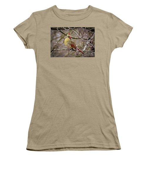 Women's T-Shirt (Junior Cut) featuring the photograph Mrs Cardinal II by Douglas Stucky