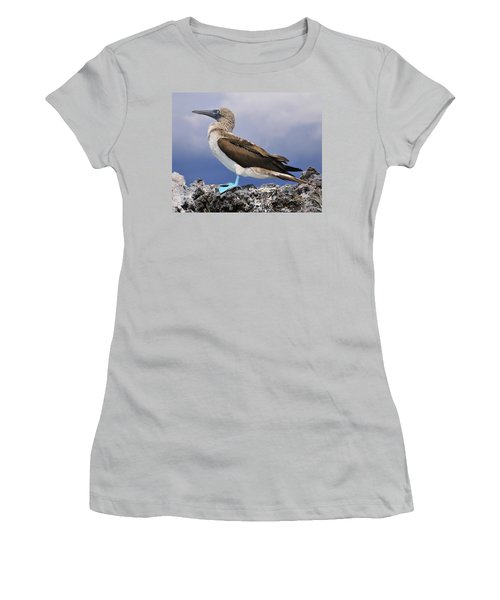 Blue-footed Booby Women's T-Shirt (Junior Cut) by Tony Beck
