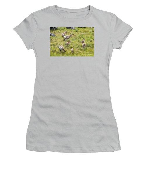 Pronghorn Antelope In Lamar Valley Women's T-Shirt (Junior Cut) by Belinda Greb