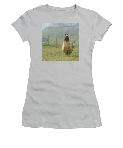 Coast Llama Women's T-Shirt (Junior Cut) by Wendy McKennon