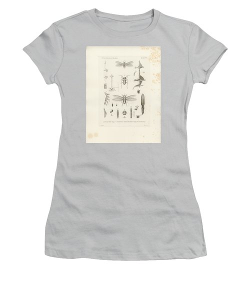 African Termites And Their Anatomy Women's T-Shirt (Junior Cut) by W Wagenschieber