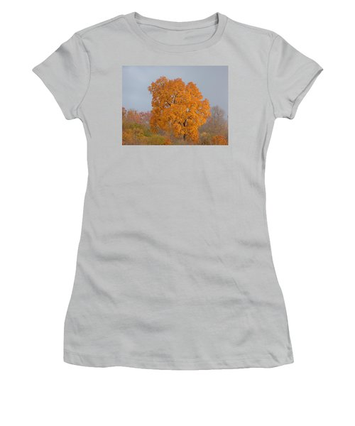 Autumn Tree Women's T-Shirt (Junior Cut) by Donald C Morgan