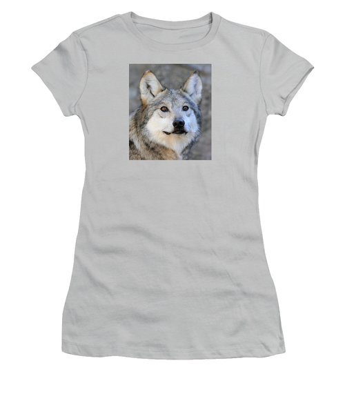 Curious Wolf Women's T-Shirt (Athletic Fit)