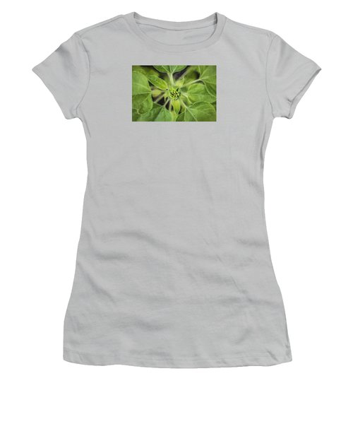 Sunflower Helianthus Giganteus Painted Women's T-Shirt (Junior Cut) by Rich Franco