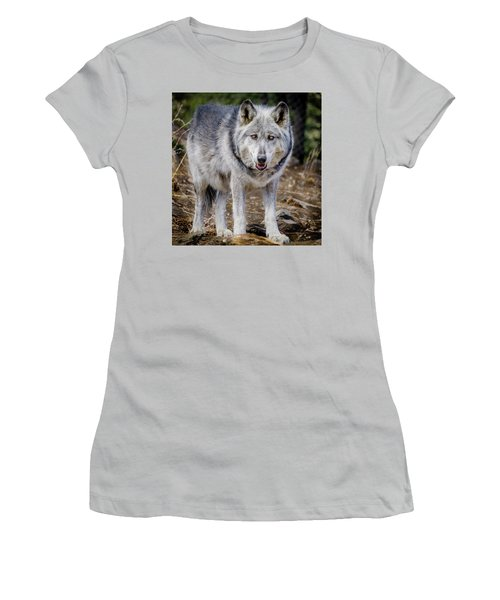 Women's T-Shirt (Junior Cut) featuring the photograph The Great Gray Wolf by Teri Virbickis
